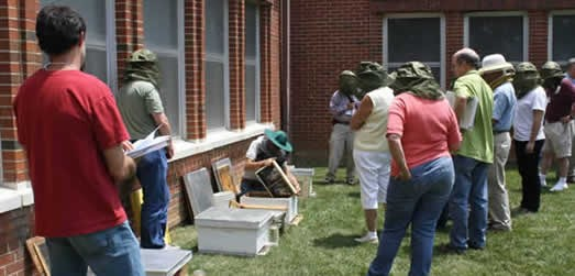 GA Master Beekeeper Cindy Bee demonstrating how to install a package of bees.