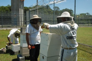 prison-program-opening-bee-boxes